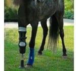 Meet Molly: A Wonderful Horse