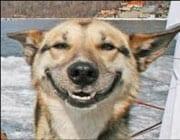 smileydog2